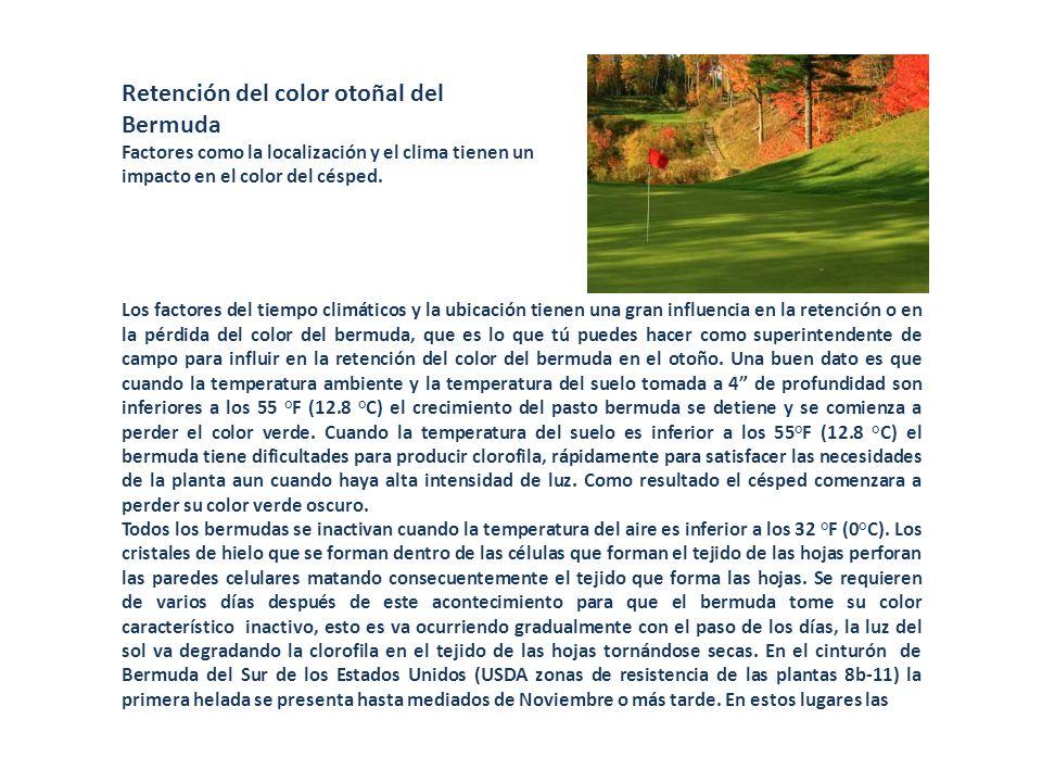 Retención del color otoñal del Bermuda Factores como la localización y el clima tienen un impacto en el color del césped. Los factores del tiempo clim