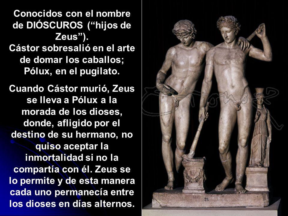 Conocidos con el nombre de DIÓSCUROS (hijos de Zeus). Cástor sobresalió en el arte de domar los caballos; Pólux, en el pugilato. Cuando Cástor murió,