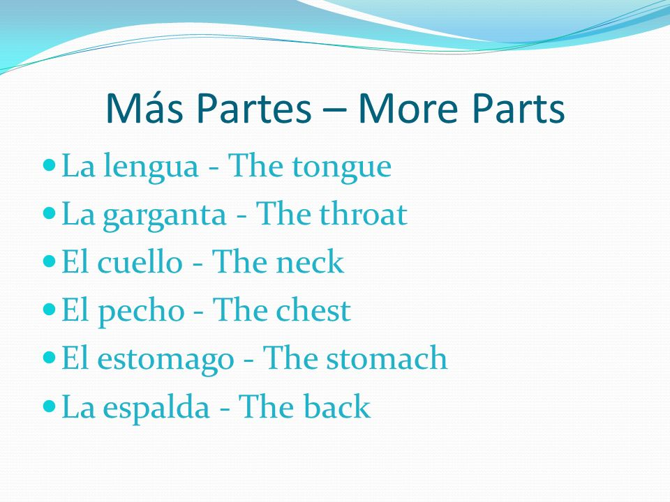 Más Partes – More Parts La lengua - The tongue La garganta - The throat El cuello - The neck El pecho - The chest El estomago - The stomach La espalda - The back