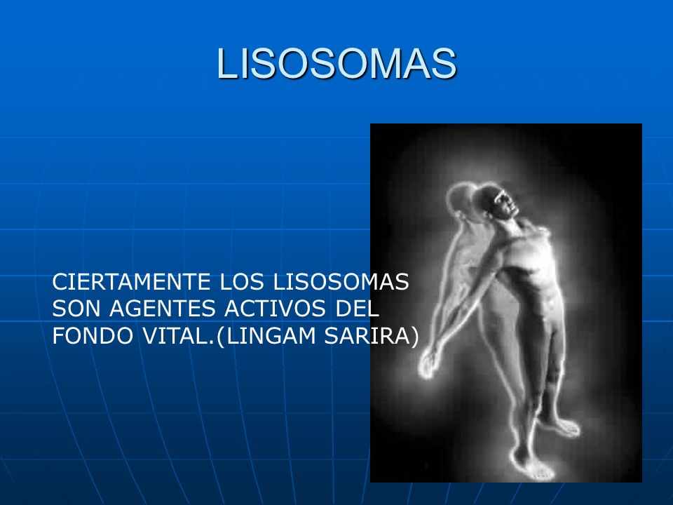 LISOSOMAS CIERTAMENTE LOS LISOSOMAS SON AGENTES ACTIVOS DEL FONDO VITAL.(LINGAM SARIRA)