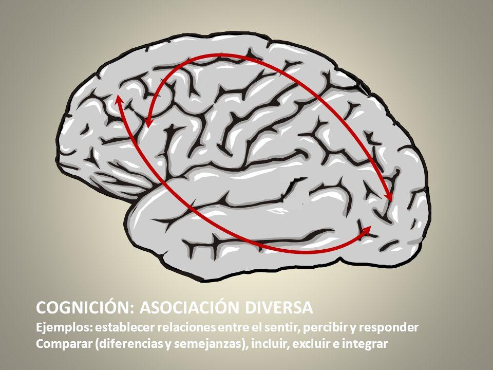 COGNICIÓN: ASOCIACIÓN DIVERSA Ejemplos: establecer relaciones entre el sentir, percibir y responder Comparar (diferencias y semejanzas), incluir, excl
