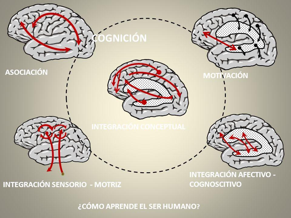 ASOCIACIÓN MOTIVACIÓN INTEGRACIÓN SENSORIO - MOTRIZ INTEGRACIÓN AFECTIVO - COGNOSCITIVO ¿CÓMO APRENDE EL SER HUMANO ? INTEGRACIÓN CONCEPTUAL COGNICIÓN