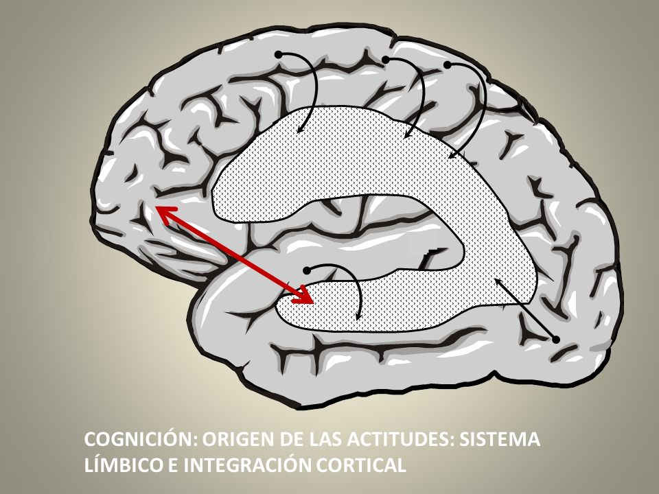 COGNICIÓN: ORIGEN DE LAS ACTITUDES: SISTEMA LÍMBICO E INTEGRACIÓN CORTICAL