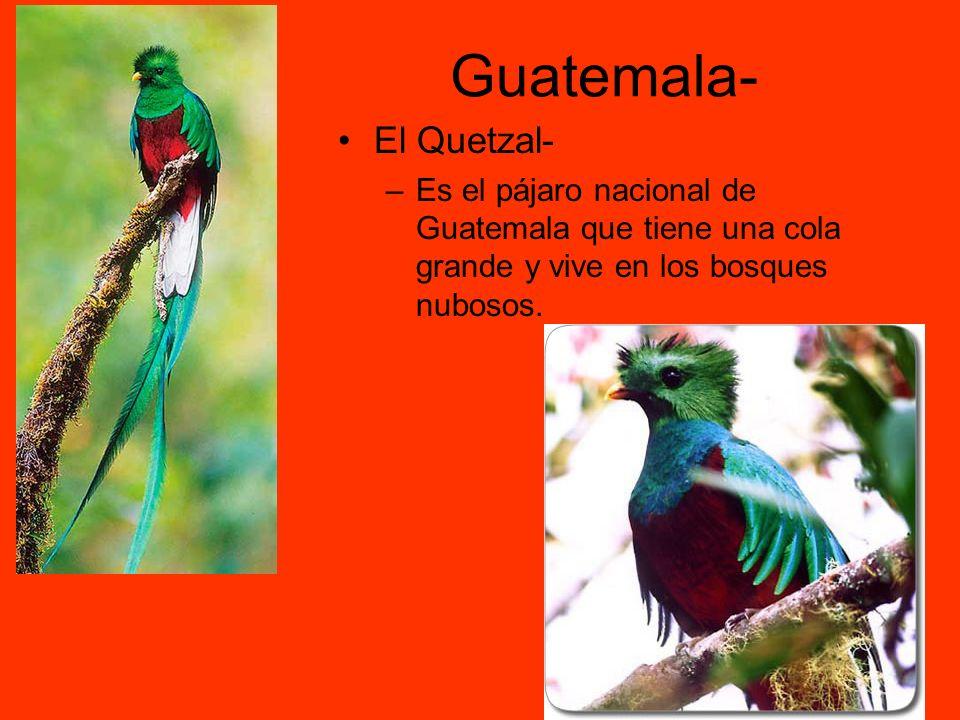 Guatemala- El Quetzal- –Es el pájaro nacional de Guatemala que tiene una cola grande y vive en los bosques nubosos.