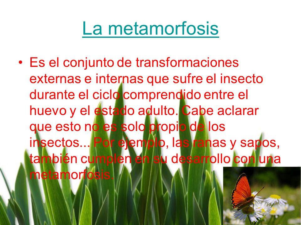 La metamorfosis Es el conjunto de transformaciones externas e internas que sufre el insecto durante el ciclo comprendido entre el huevo y el estado ad