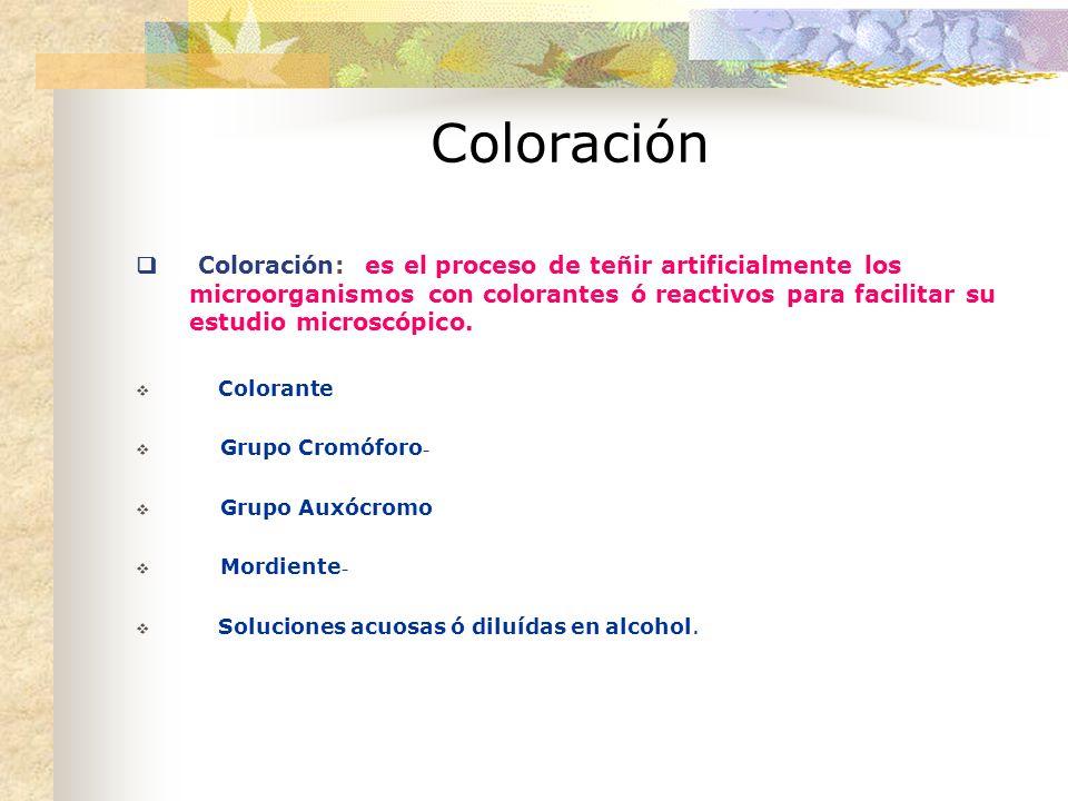 Coloración Coloración: es el proceso de teñir artificialmente los microorganismos con colorantes ó reactivos para facilitar su estudio microscópico.