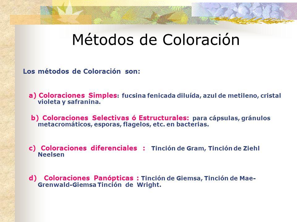 Métodos de Coloración Los métodos de Coloración son: a) Coloraciones Simples : fucsina fenicada diluída, azul de metileno, cristal violeta y safranina.