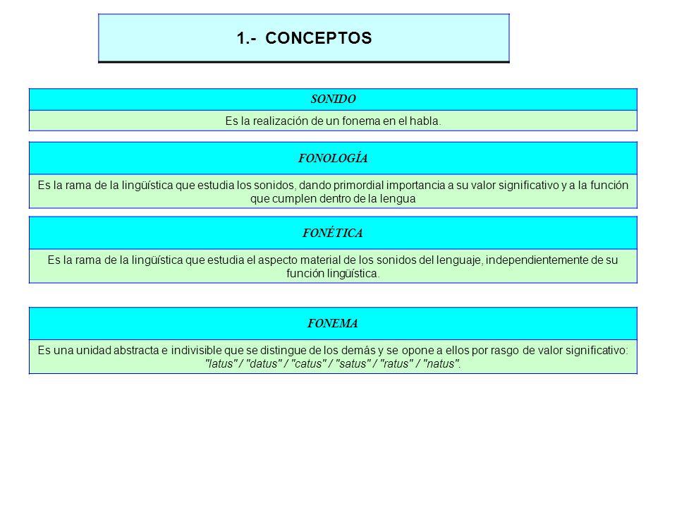 SONIDO Es la realización de un fonema en el habla. 1.- CONCEPTOS FONÉTICA Es la rama de la lingüística que estudia el aspecto material de los sonidos