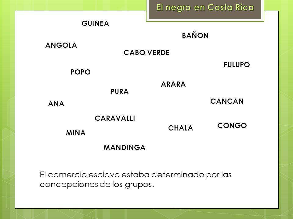 PURA ANGOLA ANA CANCAN CHALA GUINEA MANDINGA ARARA FULUPO MINA CONGO CARAVALLI CABO VERDE BAÑON POPO El comercio esclavo estaba determinado por las co