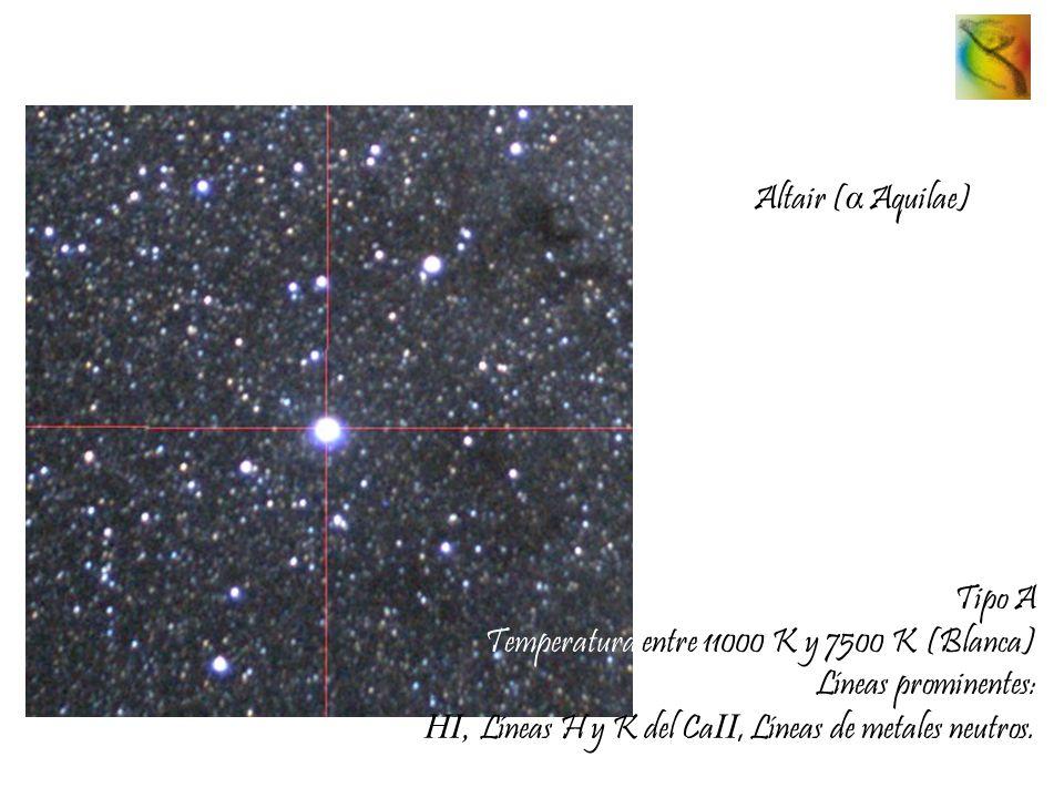 Altair ( α Aquilae) Tipo A Temperatura entre 11000 K y 7500 K (Blanca) Líneas prominentes: HI, Líneas H y K del Ca II, Líneas de metales neutros.