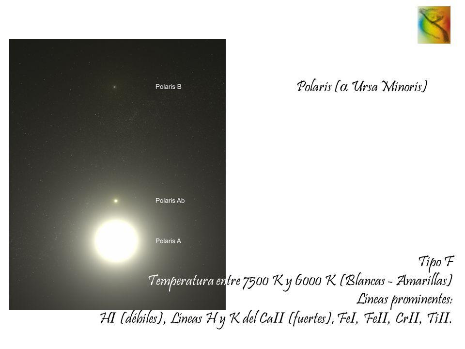 Polaris ( α Ursa Minoris) Tipo F Temperatura entre 7500 K y 6000 K (Blancas - Amarillas) Líneas prominentes: H I (débiles), Líneas H y K del Ca II (fu
