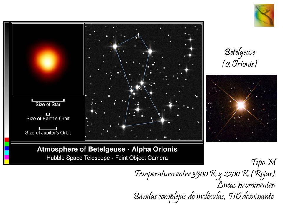 Betelgeuse ( α Orionis) Tipo M Temperatura entre 3500 K y 2200 K (Rojas) Líneas prominentes: Bandas complejas de moléculas, TiO dominante.