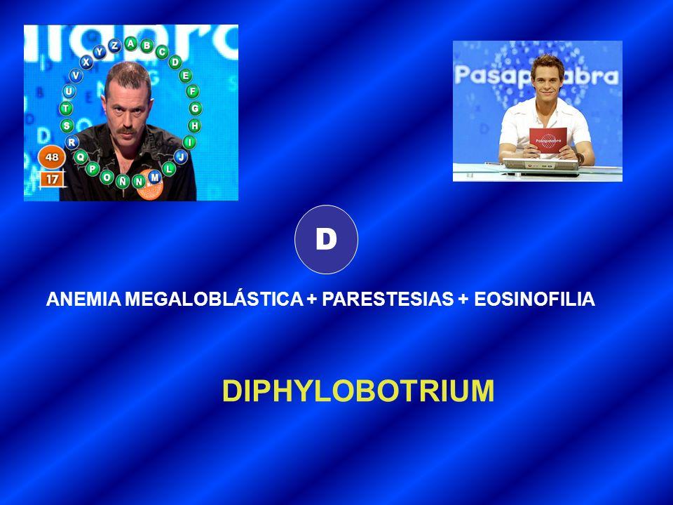 D ANEMIA MEGALOBLÁSTICA + PARESTESIAS + EOSINOFILIA DIPHYLOBOTRIUM