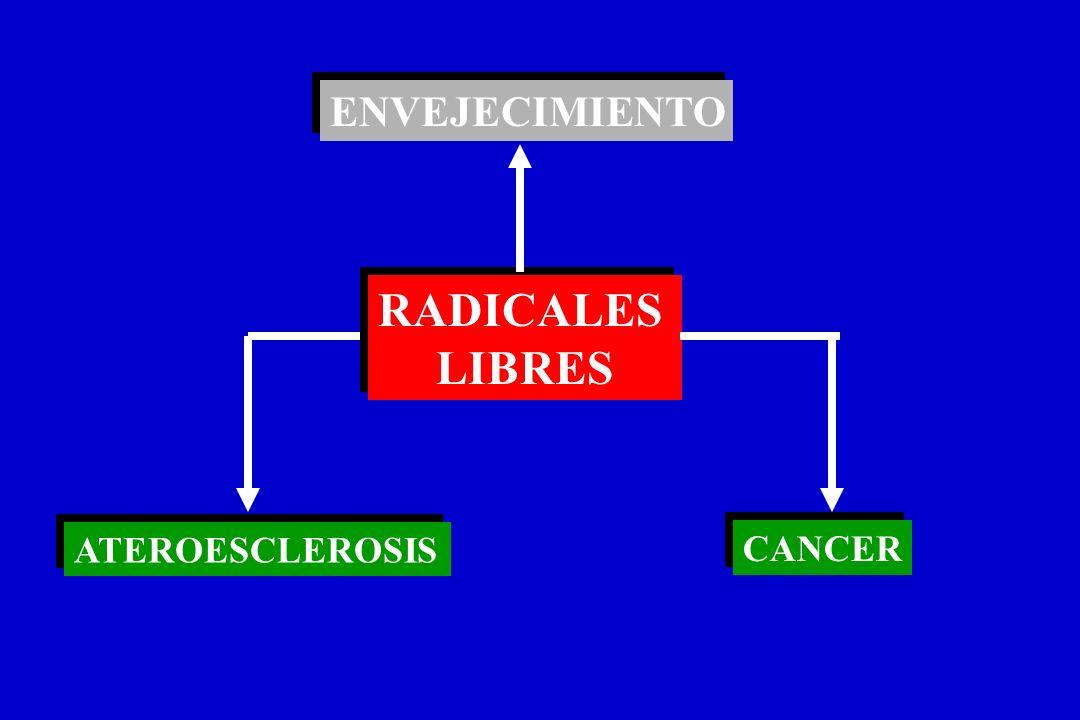 PROCESOS QUE ORIGINAN LA REPLICACIÓN DE CELULAS NEOPLASICAS PROCARCINOGENO Detoxificación CARCINOGENO Detoxificación INTERACCION CON DNAReparación del DNA REPLICACION ANORMAL Apoptosis DEL DNA SINTESIS ANORMAL DE CELULAS DNA Y PROTEINAS NEOPLASICAS P450 GST