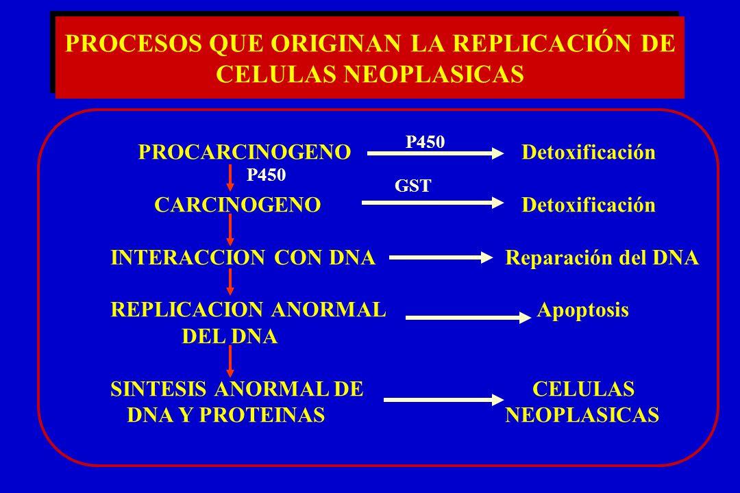 PROCESOS QUE ORIGINAN LA REPLICACIÓN DE CELULAS NEOPLASICAS PROCARCINOGENO Detoxificación CARCINOGENO Detoxificación INTERACCION CON DNAReparación del