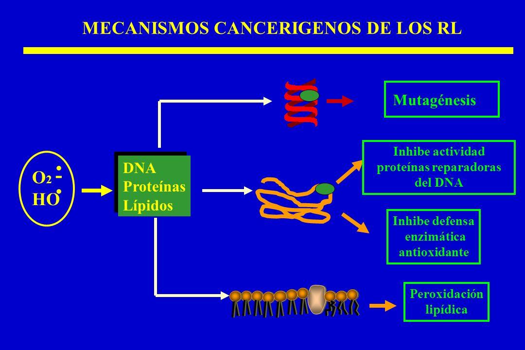 MECANISMOS CANCERIGENOS DE LOS RL DNA Proteínas Lípidos DNA Proteínas Lípidos. O 2 HO -. Mutagénesis Peroxidación lipídica Inhibe actividad proteínas