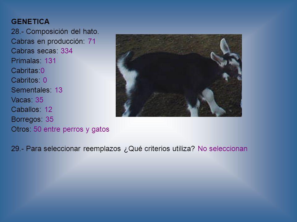 GENETICA 28.- Composición del hato. Cabras en producción: 71 Cabras secas: 334 Primalas: 131 Cabritas:0 Cabritos: 0 Sementales: 13 Vacas: 35 Caballos: