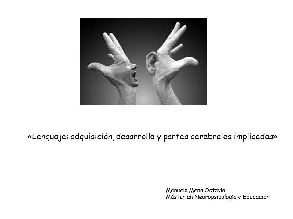«Lenguaje: adquisición, desarrollo y partes cerebrales implicadas» Manuela Mena Octavio Máster en Neuropsicología y Educación