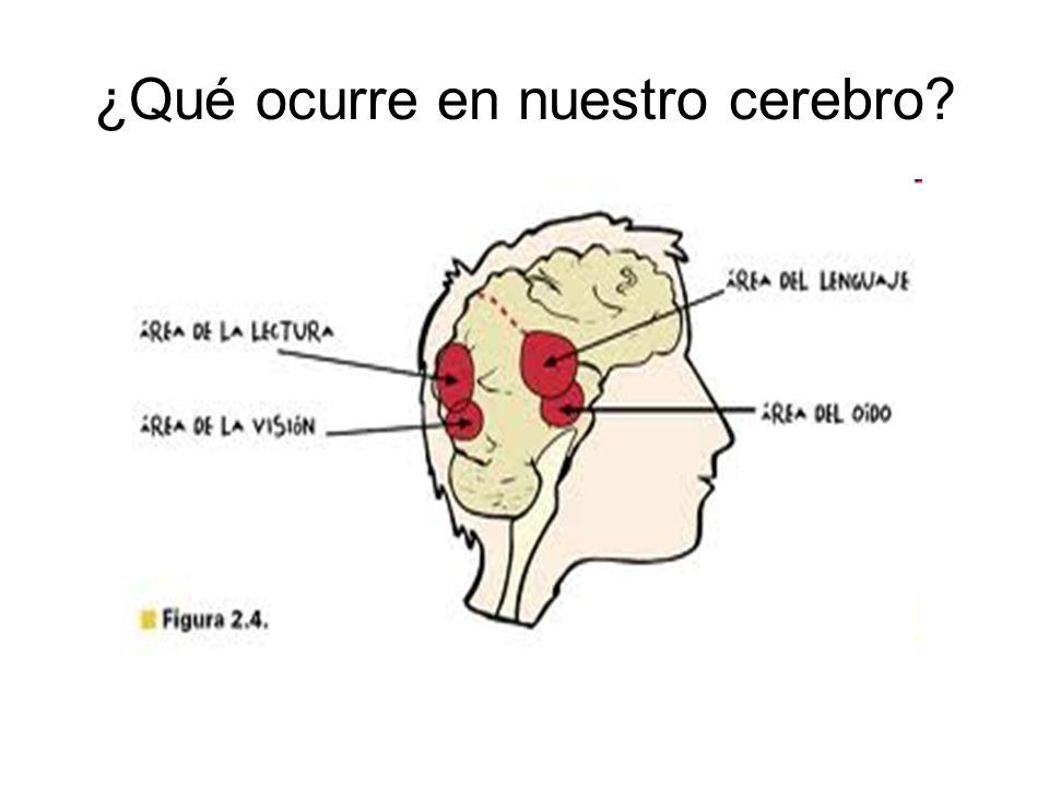 ¿Qué ocurre en nuestro cerebro?