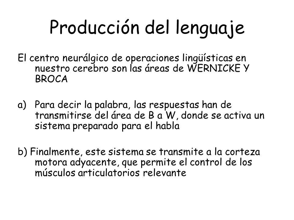 Producción del lenguaje El centro neurálgico de operaciones lingüísticas en nuestro cerebro son las áreas de WERNICKE Y BROCA a)Para decir la palabra,
