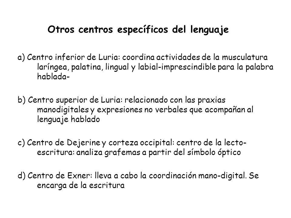 a) Centro inferior de Luria: coordina actividades de la musculatura laríngea, palatina, lingual y labial-imprescindible para la palabra hablada- b) Ce