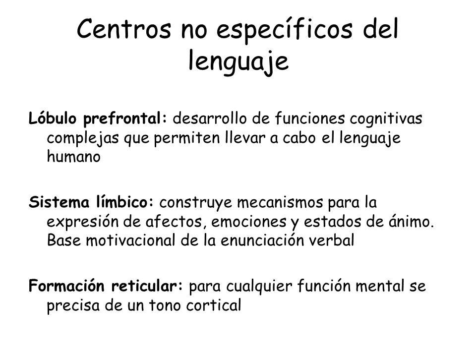 Centros no específicos del lenguaje Lóbulo prefrontal: desarrollo de funciones cognitivas complejas que permiten llevar a cabo el lenguaje humano Sist