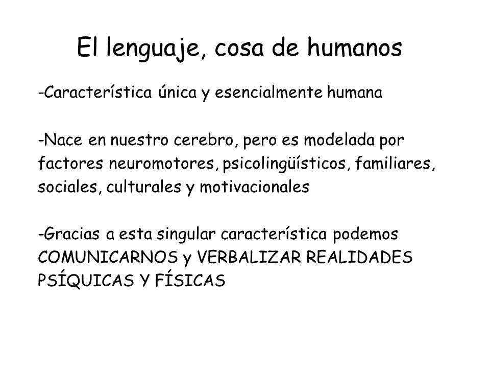 CONCLUSIONES -La comunicación es una característica humana -El lenguaje es la herramienta primordial para la comunicación -Su adquisición depende de factores psicolingüísticos, neuropsicológicos, motrices, familiares, sociales, culturales y motivacionales -La vista y el sistema auditivo son clave en la adquisición del lenguaje -Deben considerarse los aspectos neuropsicológicos y motrices para la correcta evolución del lenguaje, la lectura y la escritura en el niño -La evolución del lenguaje se da en tres estadios -El hemisferio izquierdo es el hemisferio del lenguaje -Las áreas de Wernicke y Broca son clave para la comprensión y formulación del lenguaje