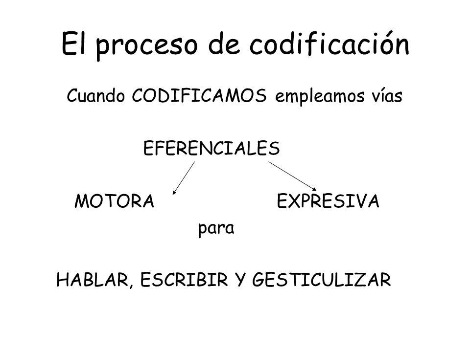 El proceso de codificación Cuando CODIFICAMOS empleamos vías EFERENCIALES MOTORA EXPRESIVA para HABLAR, ESCRIBIR Y GESTICULIZAR
