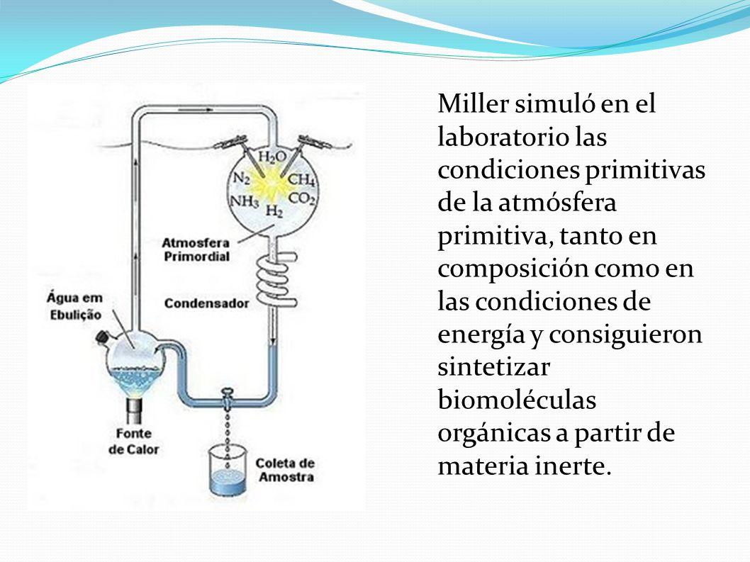 LA FORMACIÓN DE LAS PRIMERAS CÉLULAS COACERVADOS Y MICROESFERAS Oparin habla de la aparicion de coacervados, pequeñísimas gotas con una envoltura de macromoleculas y un medio interno con enzimas capaces de realizar reacciones químicas.