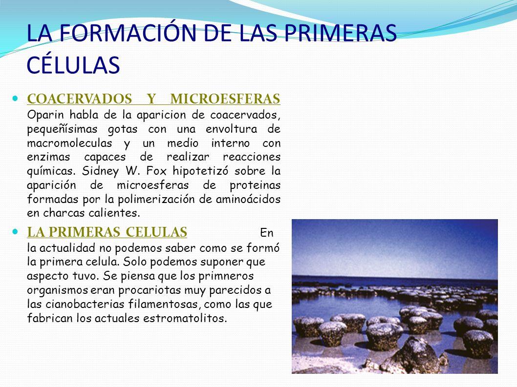 Chimeneas hidrotermales submarinas A pesar del éxito de la experiencia de Miller, se hacen diversas objeciones a la hipótesis de Oparin, entre ellas: La atmósfera primitiva sería menos reductora de lo que supuso Miller, y en esas condiciones resulta difícil la formación de compuestos orgánicos.