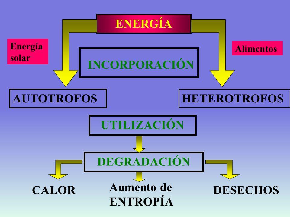 NUTRIENTES Hidratos de carbono Proteínas Lípidos Otros : vitaminas, minerales Aportan energía