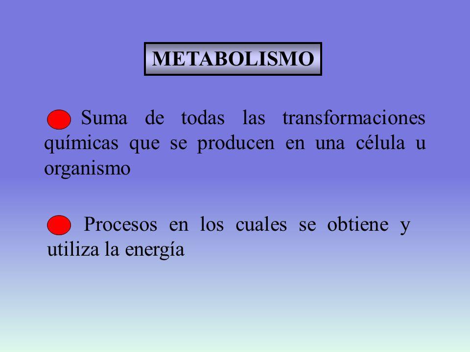 ESTUDIO DE PROCESOS DE COMBUSTIÓN Liberación de calor Consumo de O 2 Liberación de CO 2 Glucosa + O 2 CO 2 + H 2 O + calor cámaras calorimétricas OXIDACIONES BIOLOGICAS