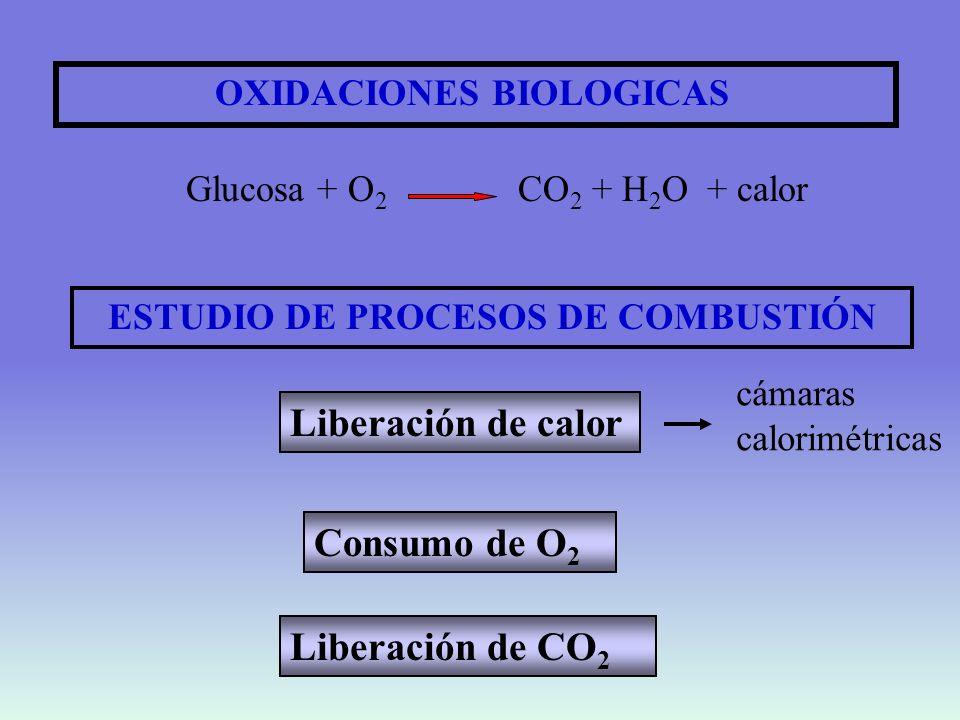 Calor de combustión de compuestos orgánicos Hidratos de carbono Grasas Proteínas Calor de combustión Calor liberado en organismos (kJ/g) 17,6 39,7 23,8 17,1 38,3 17,1 C 6 H 12 O 6 + 6O 2 6CO 2 + 6H 2 O C 3 H 5 O 3 (C 4 OH 7 ) 3 + 18.5 O 2 15CO 2 + 13 H 2 O C 6 H 13 O 2 N+ 7.5 O 2 5.5 CO 2 + 5.5 H 2 O + 0.5 CO 2 (NH 2 ) 2 2 C 6 H 13 O 2 N +14.5 O 2 12 CO 2 + 13 H 2 O + N 2