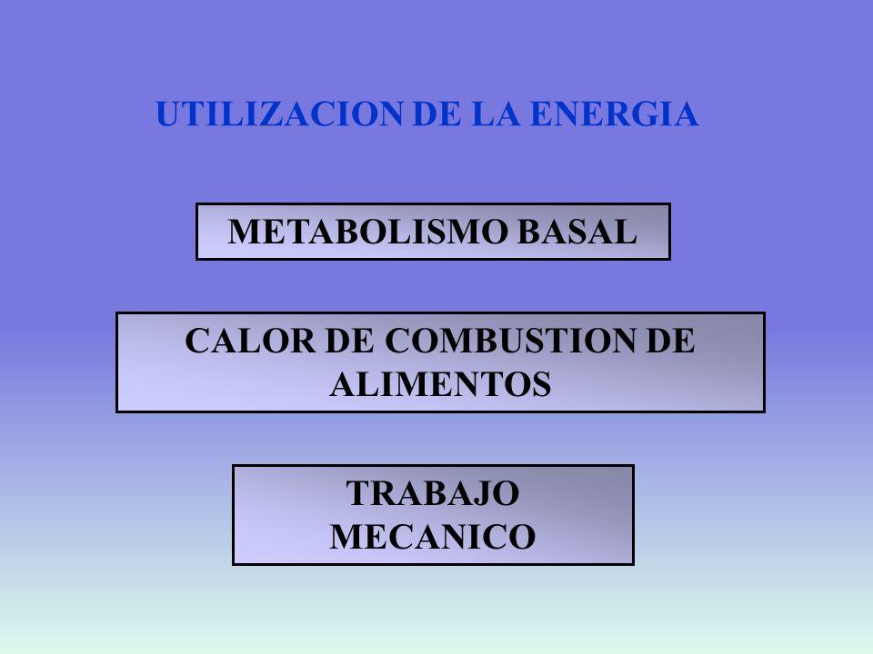 METABOLISMO BASAL Energía necesaria para el desarrollo de las funciones vitales y el mantenimiento de la temperatura corporal.