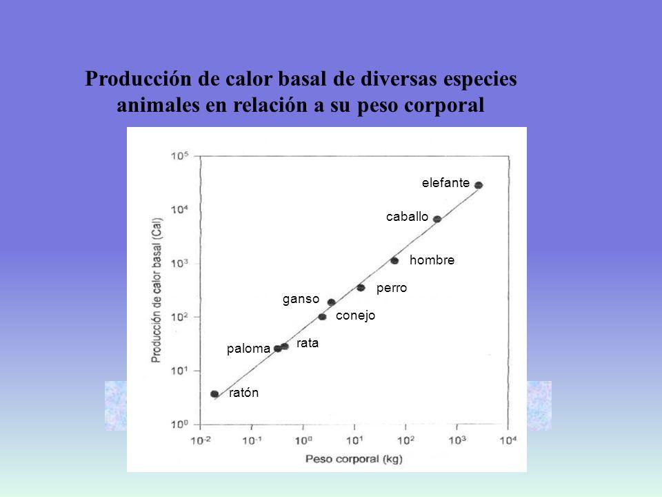 RELACION DEL METABOLISMO BASAL CON LA SUPERFICIE CORPORAL Metabolismo basal/día = S x 24 h x 167 kJ/m 2 h