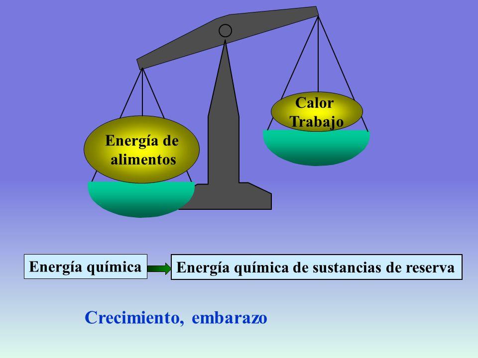 Energía de alimentos Calor Trabajo Pérdida de peso Energía química de sustancias de reserva Calor, Trabajo