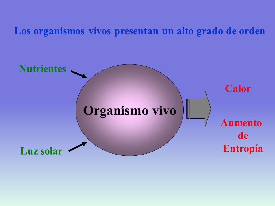 CRECIMIENTO Célula Disminución de entropía Aumento de energía libre Alrededores Aumento de entropía Disminución de energía libre Universo Aumento de entropía Disminución de energía libre