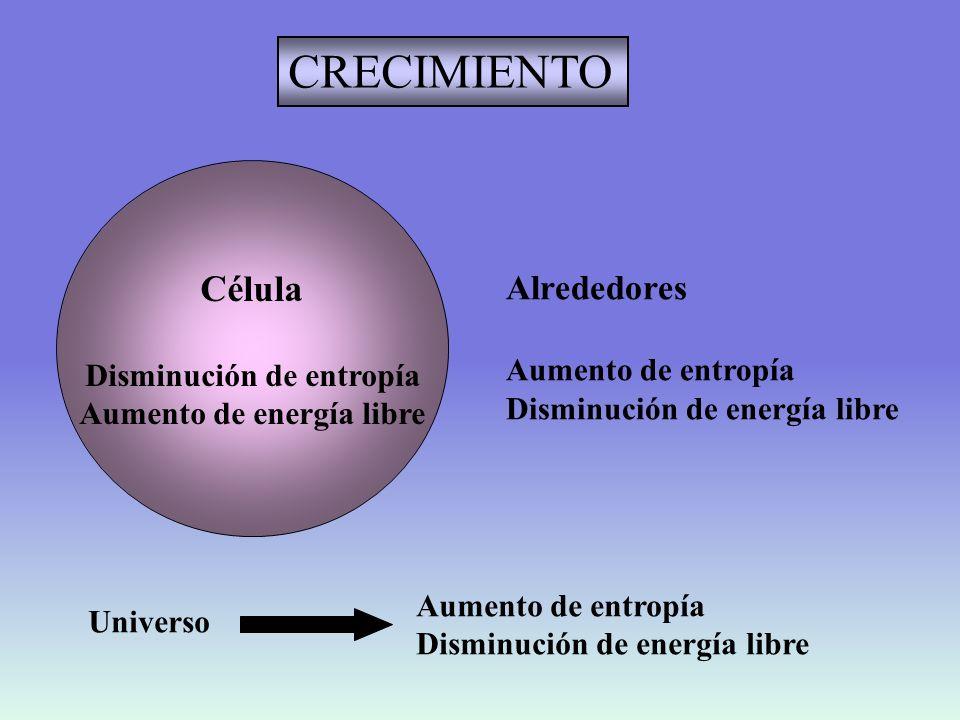 ESTADO ESTACIONARIO Célula Entropía constante Energía libre constante Alrededores Aumento de entropía Disminución de energía libre Universo Aumento de entropía Disminución de energía libre