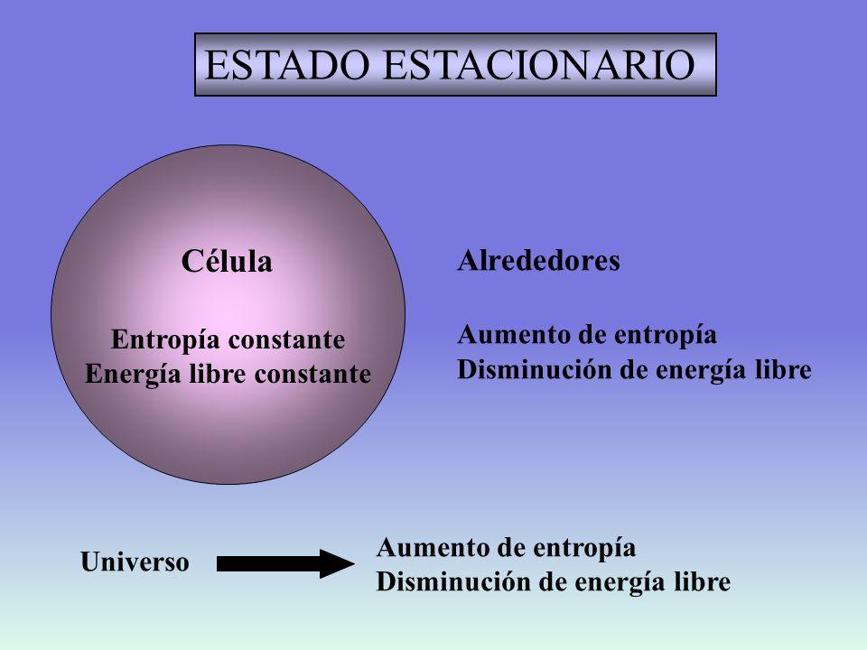 DEGRADACION Célula Aumento de entropía Disminución de energía libre Alrededores Entropía constante Energía libre constante Universo Aumento de entropía Disminución de energía libre