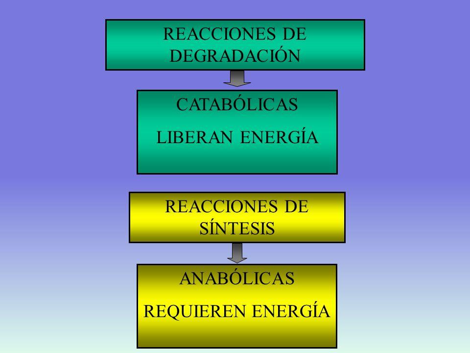 COMO HACEN LOS SERES VIVOS PARA LLEVAR A CABO REACCIONES ANABÓLICAS Y PROCESOS QUE REQUIEREN ENERGÍA A TRAVES DE REACCIONES ACOPLADAS Elementos 1 Una reacción que libera energía 2 Una reacción que requiera energía 3 Un intermediario común