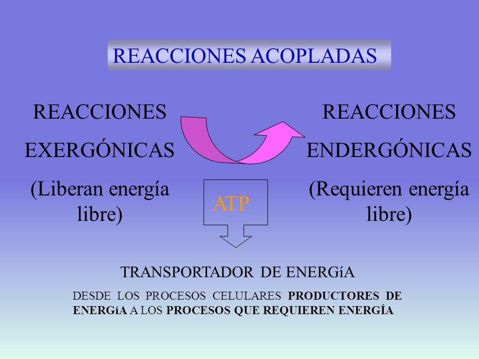 Utilización de la energía libre para realizar trabajo mecánico y químico