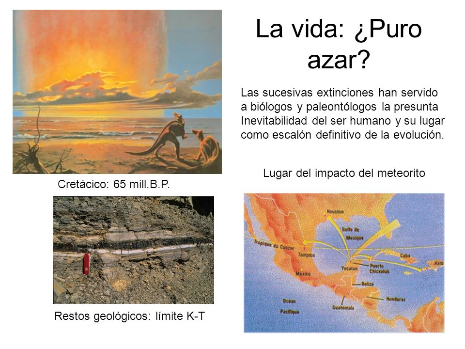 La vida: ¿Puro azar? Cretácico: 65 mill.B.P. Restos geológicos: límite K-T Lugar del impacto del meteorito Las sucesivas extinciones han servido a bió