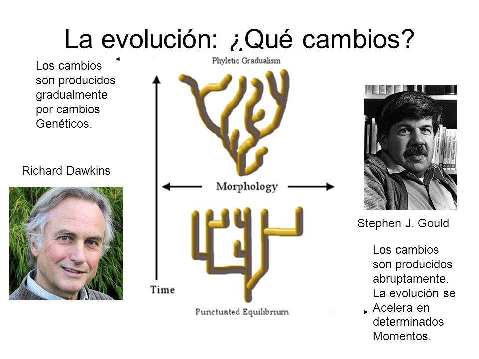 La evolución: ¿Qué cambios? Stephen J. Gould Richard Dawkins Los cambios son producidos abruptamente. La evolución se Acelera en determinados Momentos