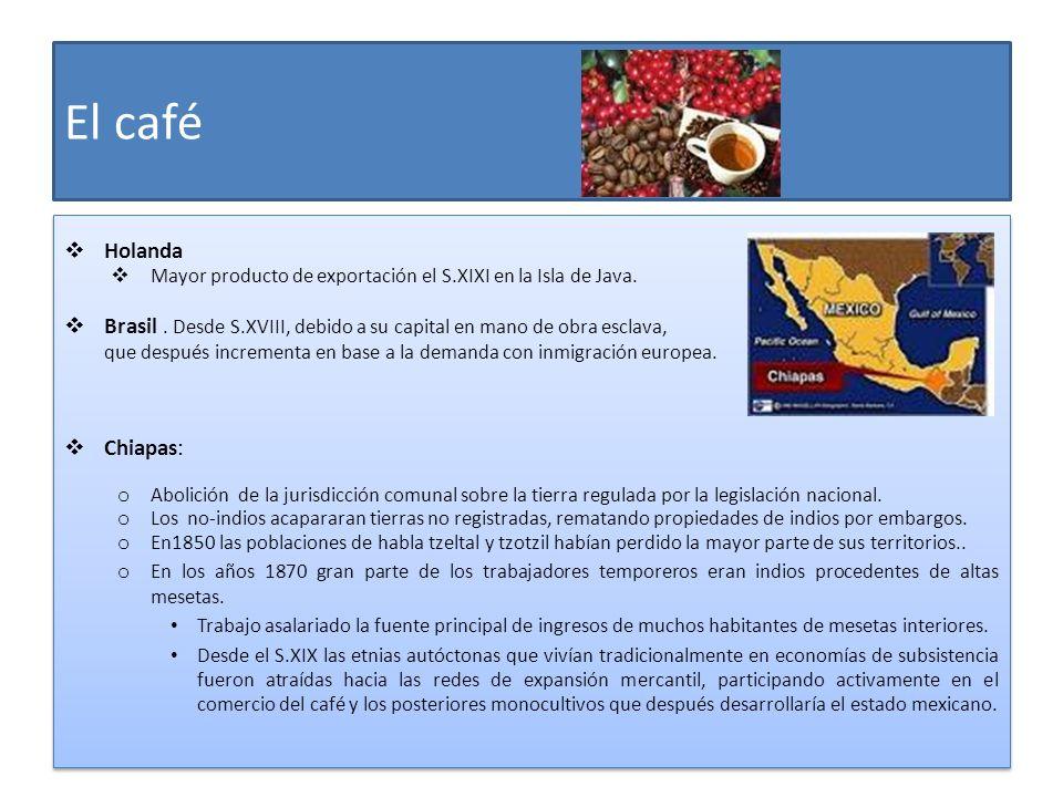 El café Holanda Mayor producto de exportación el S.XIXI en la Isla de Java. Brasil. Desde S.XVIII, debido a su capital en mano de obra esclava, que de