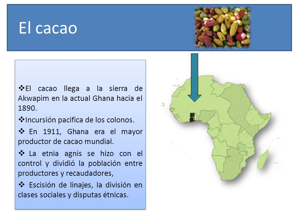 El cacao El cacao llega a la sierra de Akwapim en la actual Ghana hacia el 1890. Incursión pacifica de los colonos. En 1911, Ghana era el mayor produc