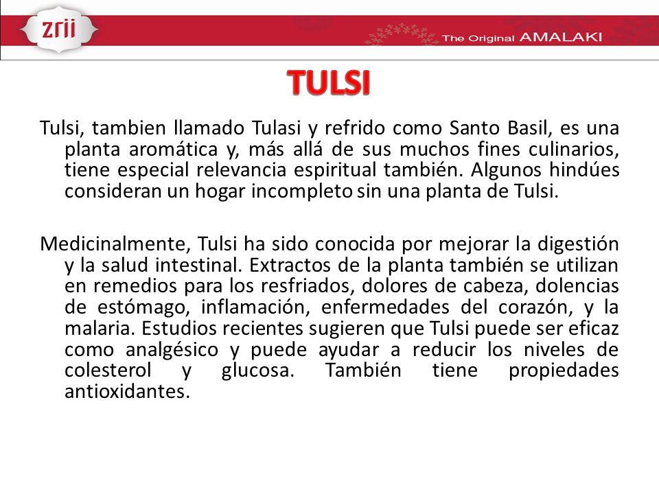 Tulsi, tambien llamado Tulasi y refrido como Santo Basil, es una planta aromática y, más allá de sus muchos fines culinarios, tiene especial relevanci