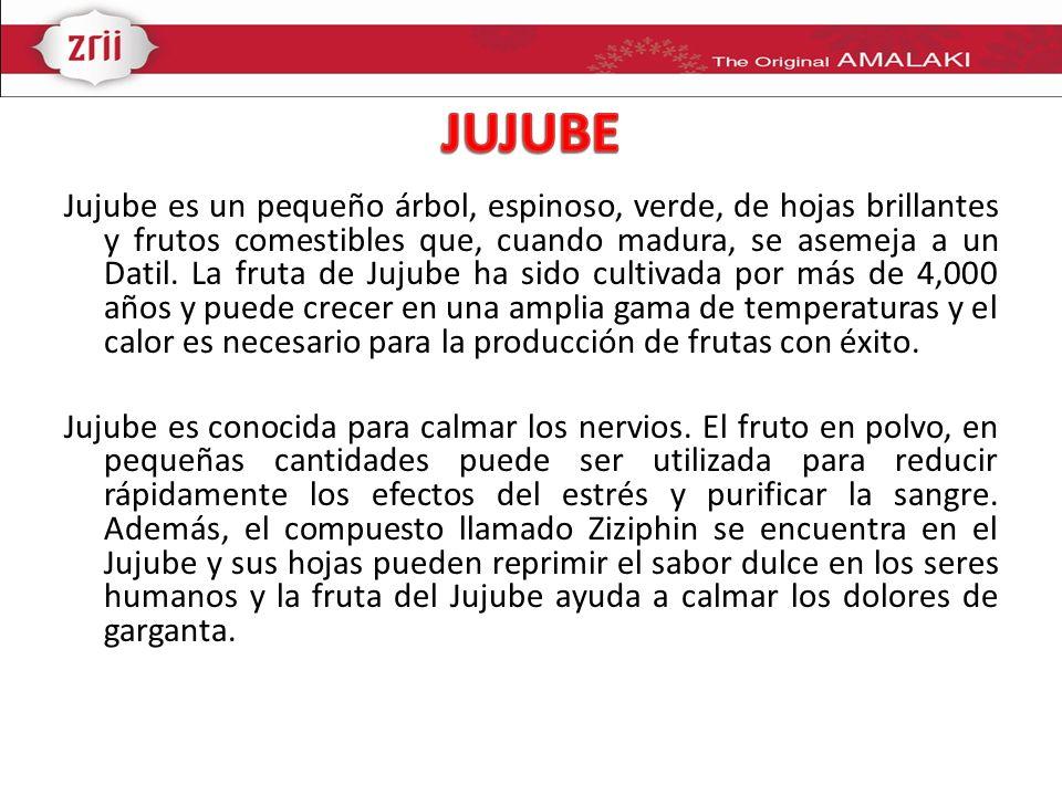 Jujube es un pequeño árbol, espinoso, verde, de hojas brillantes y frutos comestibles que, cuando madura, se asemeja a un Datil. La fruta de Jujube ha