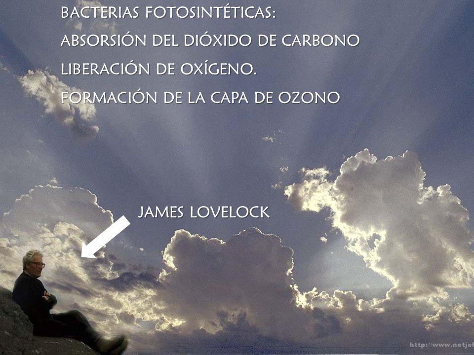 BACTERIAS FOTOSINTÉTICAS: ABSORSIÓN DEL DIÓXIDO DE CARBONO LIBERACIÓN DE OXÍGENO. FORMACIÓN DE LA CAPA DE OZONO JAMES LOVELOCK