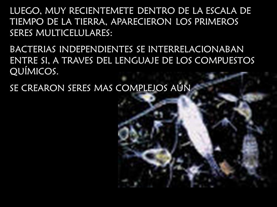 LUEGO, MUY RECIENTEMETE DENTRO DE LA ESCALA DE TIEMPO DE LA TIERRA, APARECIERON LOS PRIMEROS SERES MULTICELULARES: BACTERIAS INDEPENDIENTES SE INTERRE