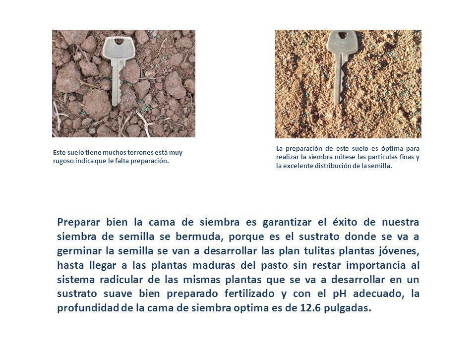 Este suelo tiene muchos terrones está muy rugoso indica que le falta preparación. La preparación de este suelo es óptima para realizar la siembra nóte